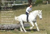 "Ultimate Horsemanship Experience- 6 Week Accelerated Learning Module -""Alchemy Place"" Sept. 2- Oct. 11"