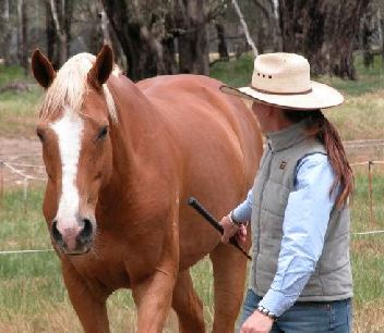 Introductory Courses -Connecting with Horses & Ground Skills