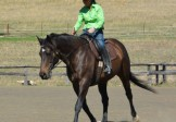 Wilton via Sydney – Intermed Course Ground skills & Riding Feb 2-4