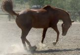 Carol Layton Equine Nutrition Seminar – September 17th -Moonbi