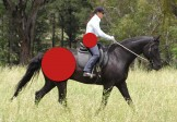 Equine Biomechanics & Saddle Fitting/ Individual sessions/ Seminars / Demonstrations/