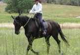 Wilton – August 3-5 -Riding with Synchronicity Course