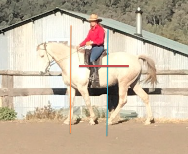 Recognizing Good Posture, Self-carriage and Balance in the horse.