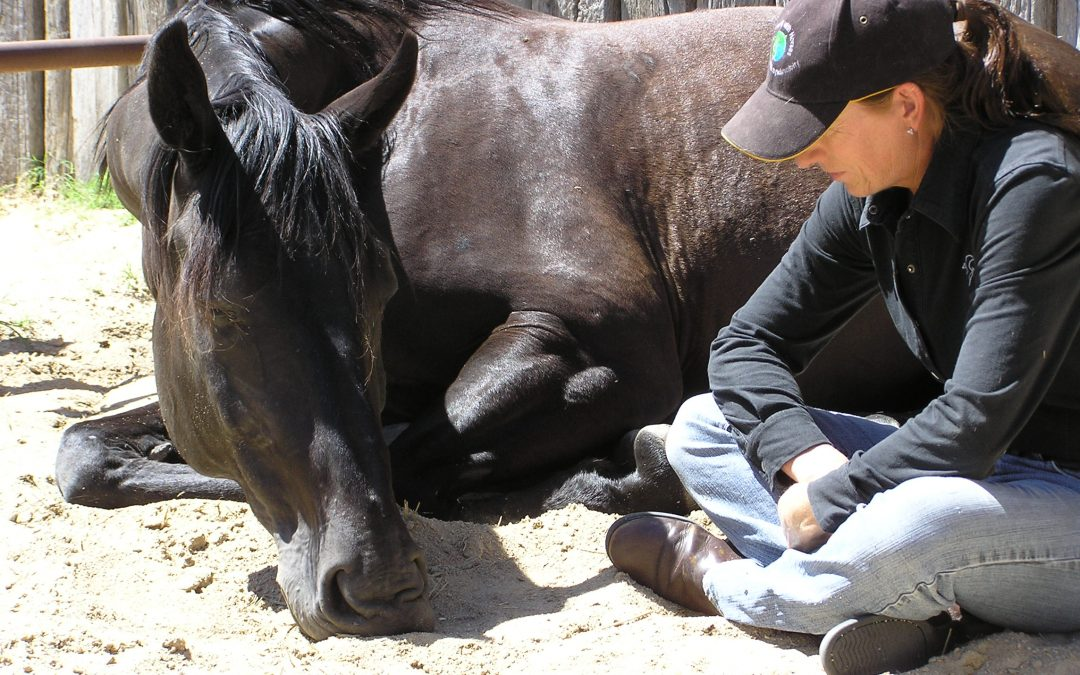 FB live interview – Connecting with & Inspiring Horses