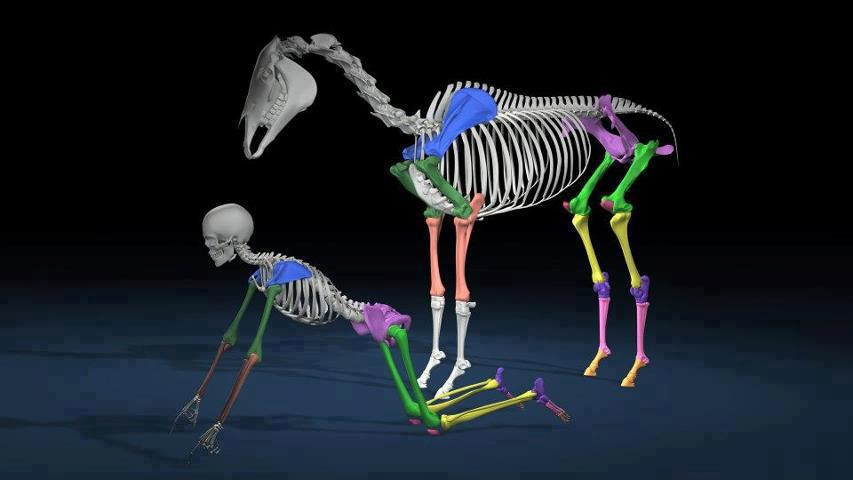 Why do biomechanics matter even if you don't want a competition or performance horse ?